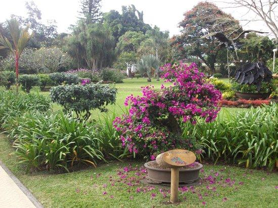 Hotel Bougainvillea: Una vista del jardín