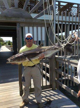 Atlantic Breeze Charters: 70 lb cobia