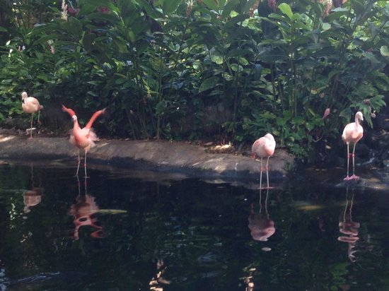 Westin Maui Resort And Spa : Flamingos between lobby and pool area