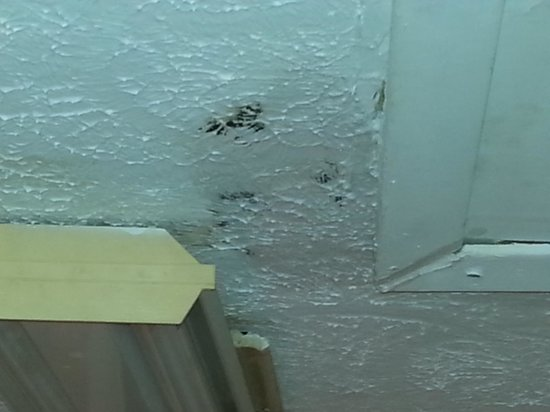 Ambassador -  A Family Resort on the Gulf: mold growing in kitchen ceiling