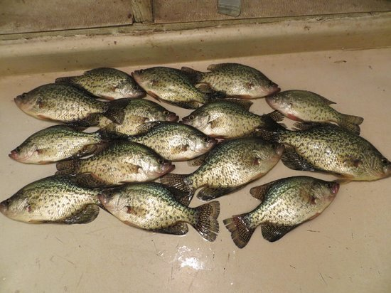 Big Foot Resort: a good night of crappie fishing