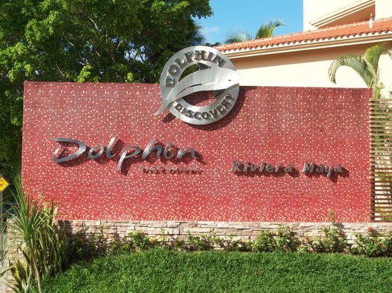 Dolphin Discovery Puerto Aventuras: dolphin