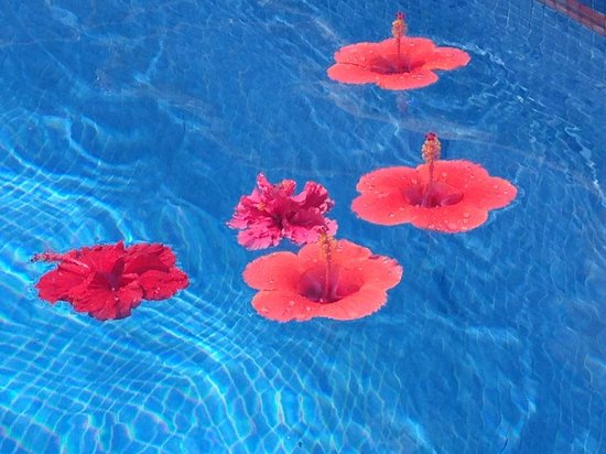 Las Brisas Acapulco: Hibiscus flowers floating in the pool.