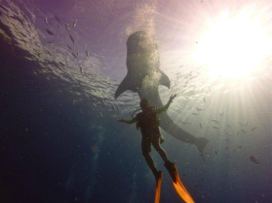Coral Bay Beach & Dive Resort : The Little Mermaid