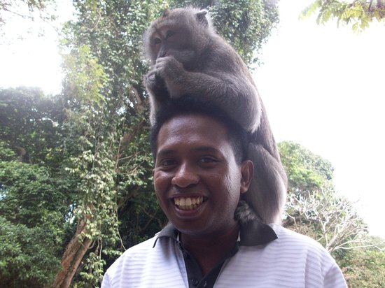 Alas Kedaton(Monkey Forest)