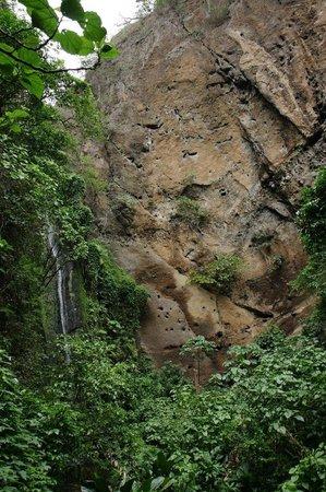 Refugio De Vida Silvestre Chocoyero-El Brujo Day Tours: parrot nests on the cliff
