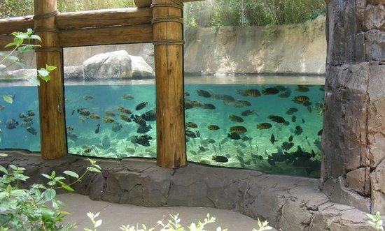 St. Louis Zoo : Aquarium