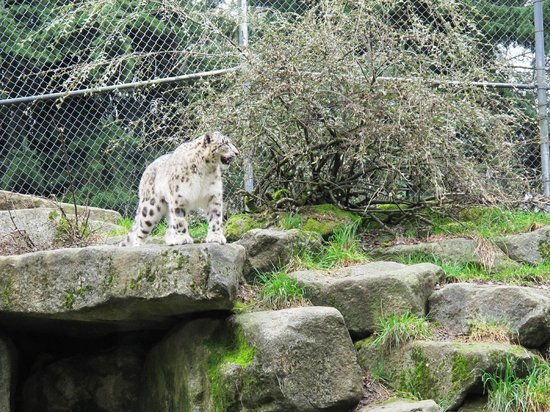 Woodland Park Zoo: Leopard