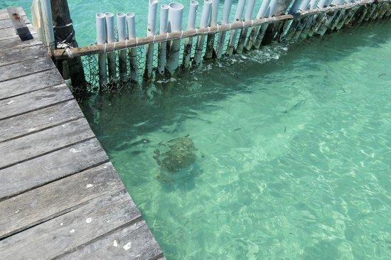 Tortugranja (Turtle Farm): In the sea (with barricade)