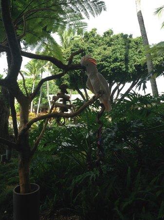 Kaua'i Marriott Resort: Kukui!