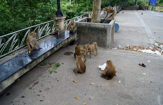 Monkey Hill : Monkey Mountain 3