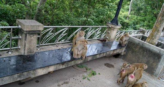 Monkey Hill : Monkey Mountain 4