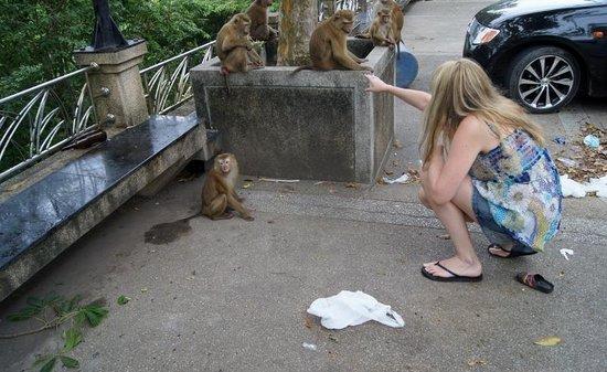 Monkey Hill : Monkey Mountain 5