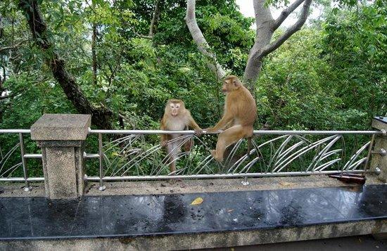 Monkey Hill: Monkey Mountain 10