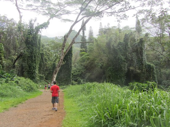 Manoa Falls: beginning of the trail