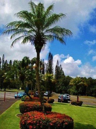 Mauna Loa : beautiful day to stop!