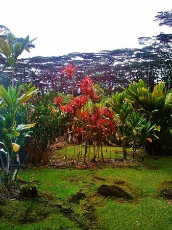 Lava Tree State Park : more foliage than flowers