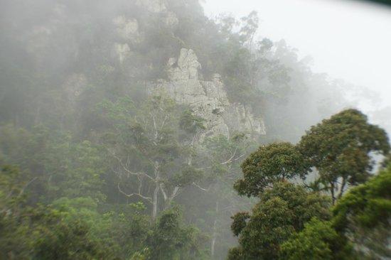 Skyrail Rainforest Cableway: Unique view of the rainforest