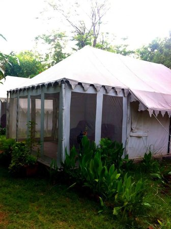 Tiger Machan Resort: Our tent