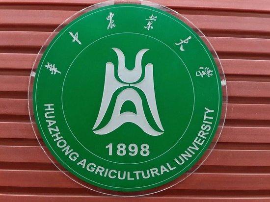 武汉华中农业大学梧桐路步行街
