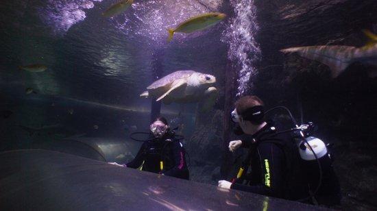 Manly Sea Life Sanctuary - Shark Dive Xtreme : 13