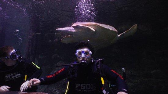 Manly Sea Life Sanctuary - Shark Dive Xtreme : 14