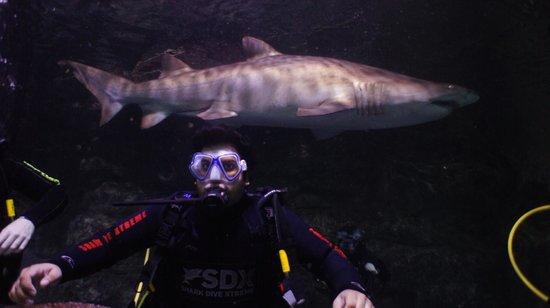Manly Sea Life Sanctuary - Shark Dive Xtreme : 7