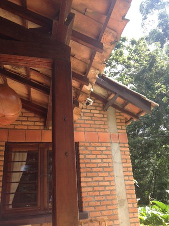 Gisakura Guest House: Monkey on the roof of the accommodation