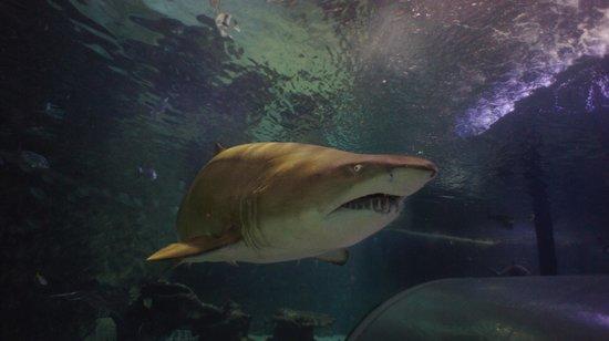 Manly Sea Life Sanctuary - Shark Dive Xtreme : 5