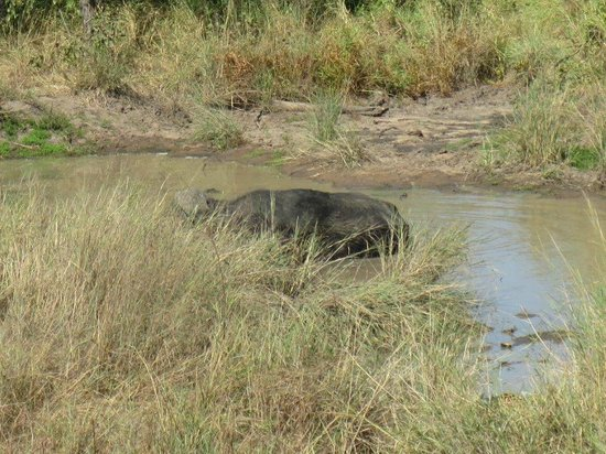 Sefapane Lodge and Safaris : Buffel en luipaard (rechtsonder)