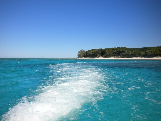 Lady Musgrave Island, Australia: lady musgrave