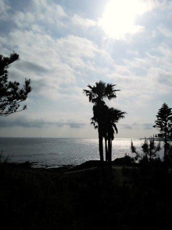 Sunny Coast Minamiboso Pet-kan