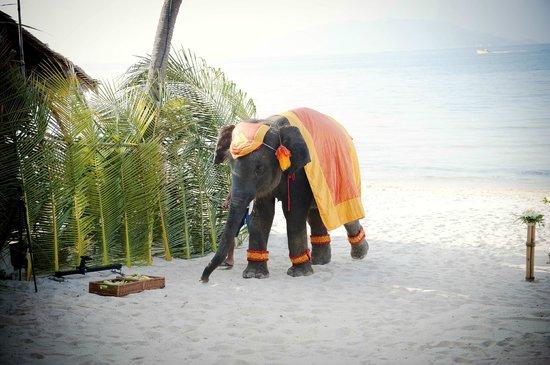 Melati Beach Resort & Spa: elephant at wedding