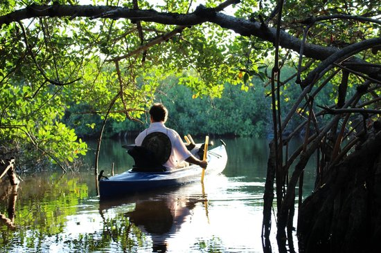 Tour The Glades - Private Wildlife Tours: Unser toller Guide Tod am Ende eines Mangroventunnels