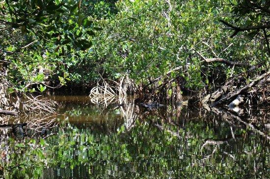 Tour The Glades - Private Wildlife Tours: Spiegelung im Wasser