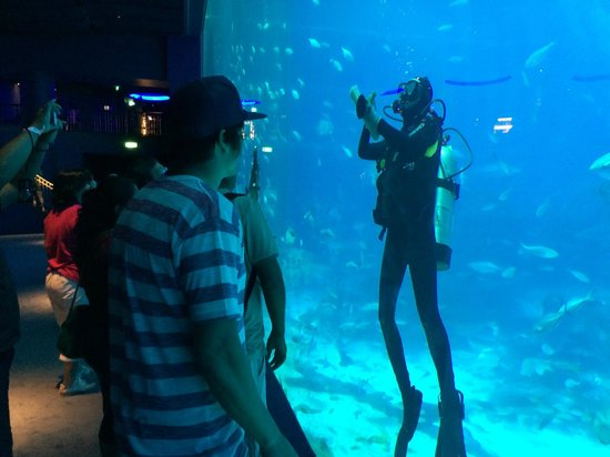 Marine Life Park : hi five the scuba guy !