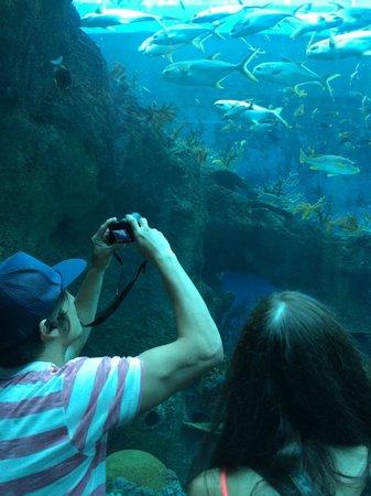 Marine Life Park : schools of fish
