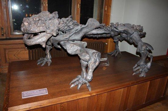 Muséum d'histoire naturelle de Vienne : Неизвестный мне приземистый ящер (скелет)