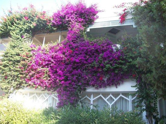 Royal Azur Thalasso Golf : внутренний дворик оьеля
