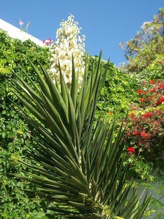 Royal Azur Thalasso Golf: цветущий сад в отеле