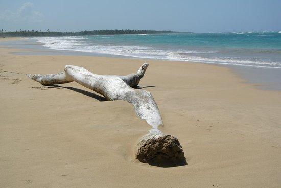 Zoetry Agua Punta Cana: la plage