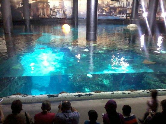 ... in the tank - Picture of Istanbul Aquarium, Istanbul - TripAdvisor