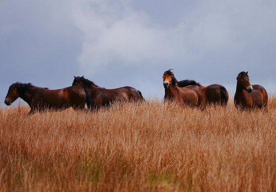 Experience Exmoor: The wild west