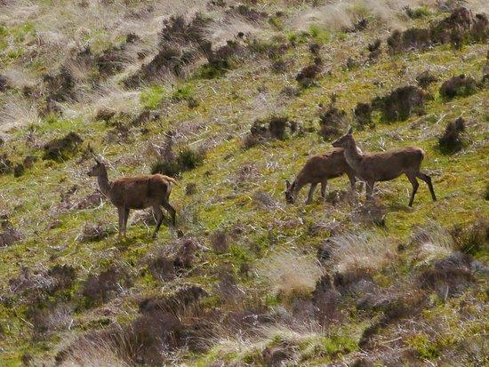 Experience Exmoor: Doe, a deer
