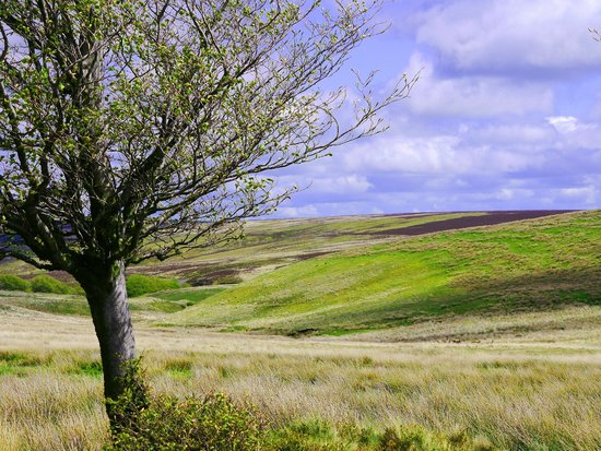 Experience Exmoor: The beautiful moors