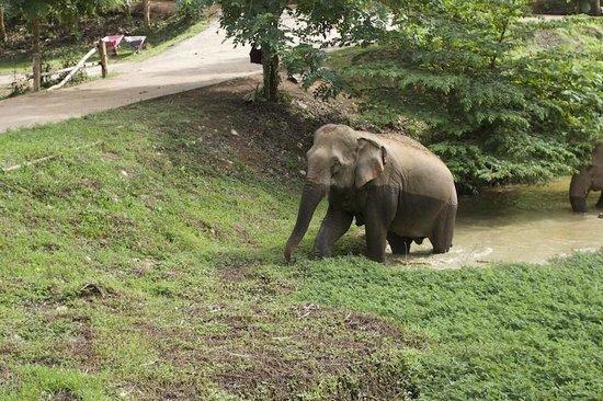 Boon Lott's Elephant Sanctuary : after a dip