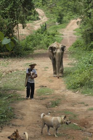 Boon Lott's Elephant Sanctuary : dogs and elephants on a walk