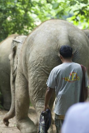 Boon Lott's Elephant Sanctuary : morning walk