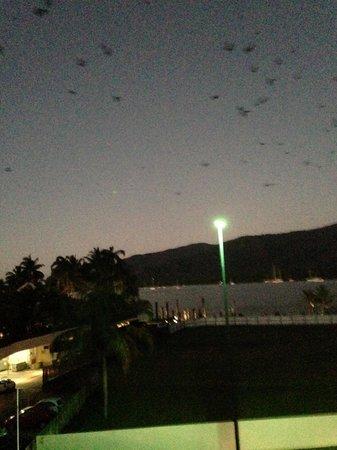 Pullman Reef Hotel Casino: 夕方6時頃に、フルーツバットの渡りが部屋から見えます。