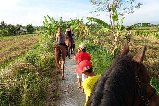 Bali Horse Adventure : Tolle Sicht in die Reisfelder